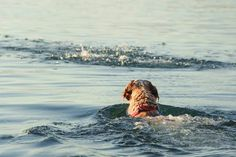 When you Need More Than a PFD: The Scoop on Dog Water Safety | Beverly Hills Veterinary Associates, Inc.