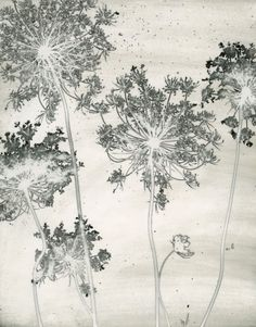 "Find out more about the artist behind this Mordancage' called ""Queen Anne's Lace"" // www.summerhousestyle.com"