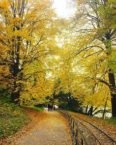 """"""" #ilovelyon #yellow #automne #fall #france #parc #park #travel #tetedor #tetedorparc #sentier #path #feuillesmortes #lyon #onlylyon #jaune #rue…"""""""