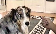 Dog Will Accept Treats from Everyone EXCEPT This One Person! (HILARIOUS)