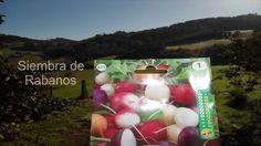 Cultivo de rabanitos (tuhuertofacil.es) (huerto urbano)