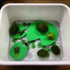 Frog Life Cycle - Sensory Bin (foam lilypads, dollar store glass pebbles, water beads) [Ms.Makinson]