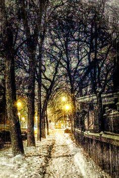 Snowy walk in Winnipeg - image by Carla Dyck