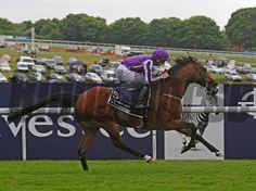 Coolmore and partners' St Nicholas Abbey notched a record third consecutive Investec Coronation Cup (Eng-I) victory in convincing style on Derby day June 1 at Epsom. Horse Racing, Race Horses, Photo Store, Thoroughbred Horse, Derby Day, Saint Nicholas, Horse Photos, Horse Breeds, Victorious