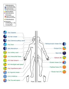 There are tremendous similarities and differences among the bacterial species found at different sites on the body.