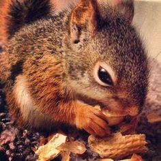 Baby Michigan squirrel!