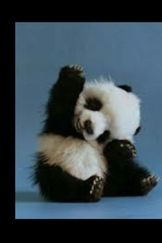 Cute panda. What else do you need?
