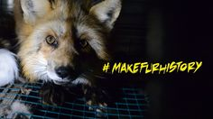 Exposing the Fur Industry