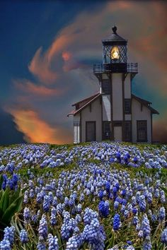 Lighthouse and bluebonnets in spring.                                                                                                                                                      More