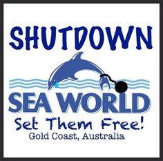 Gold Coast Queensland, Gold Coast Australia, Queensland Australia, Save The Arctic, Sea Shepherd, Animal Activist, Stop Animal Cruelty, Miami Dolphins, Sea World