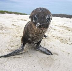 Baby sea lion that acted like a new puppy with us. The wildlife here has zero fear of humans. it's extraordinary.