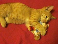 Ataques epilépticos en gatos | Cuidar de tu gato es facilisimo.com
