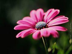 *REFLEXION  CORAZON*: Si! Quieres tu ser esta flor especial?