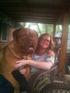 Dogue de Bordeaux aka French Mastiff (HOLY CRAP HE'S HUGE)