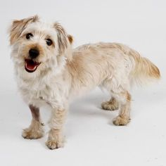 Maurice is a sweet Terrier mix available for adoption at our Mission campus. Come visit him today!