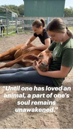 Cute Baby Animals, Farm Animals, Vegan Quotes, Vegan Animals, Vegan Lifestyle, Inspirational Message, Animal Quotes, Beautiful Babies, Animal Rescue