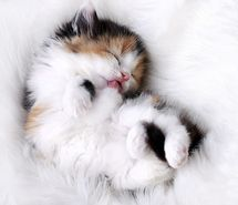 Inspiring picture awesome, awn, cat, cool, cute. Resolution: 900x623 px. Find the picture to your taste!