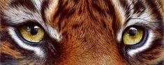 Tiger Eyes - Ballpoint Pen by VianaArts (print image)