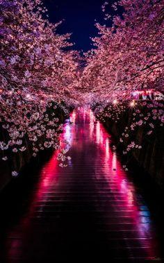 Taken at Meguro River, Tokyo Japan.