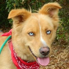 Humane Society of McCormick County | Petfinder Foundation