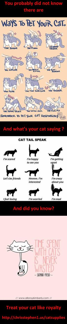 #cats yes all the way lol