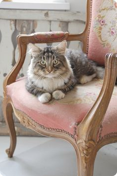 Serious #Cat & shabby chic decor