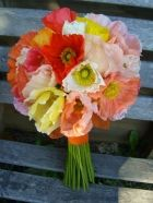 poppies for the wedding flowers