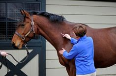 Having a plan in case of an adverse reaction can help your horse stay comfortable following vaccination.