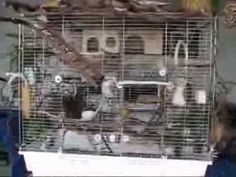 How to build a comfortable cage set up for small parrots