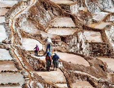 Visiting the Salinas De Maras is worth the time if you travel to Cusco.  Here, the approx 3,000 salt pools are privately owned and hand-harvested by individual families that carefully control the water flow from the hypersaline underground spring.  Salt is chiseled from the pools using a pick and placed into bags that are then tossed over a strong back and hauled up the mountain, as seen above .  Salt has been gathered here since Incan times and watching families working together to make…