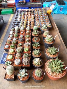 cactus it very cheap!!! and have varieties species.