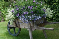 there's nothing like an old wheelbarrow planted with flowers!