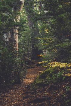 and the forest dreams eternally. Beautiful Forest, Beautiful World, Beautiful Places, Beautiful Pictures, Forest Path, Dark Forest, Conifer Forest, Forest Trail, Mystical Forest