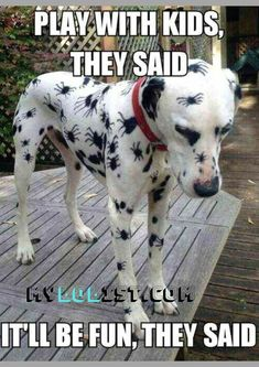 Funny Animal Memes Of The Day – 52 Pics – Lovely Animals World Memes de animales divertidos del día – 52 fotos – Lovely Animals World Funny Animal Jokes, Funny Dog Memes, Cute Funny Animals, Funny Animal Pictures, Animal Memes, Cute Baby Animals, Funny Cute, Funny Dogs, Funniest Animals