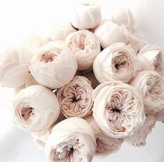 Image about flowers in Random by Azuura on We Heart It Flowers Nature, My Flower, Beautiful Flowers, Wedding Bouquets, Wedding Flowers, Peonies And Hydrangeas, White Peonies, Bloom, Luxury Flowers