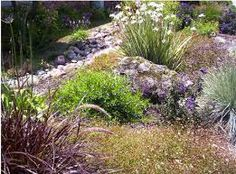 plants for hot dry climates - Google Search