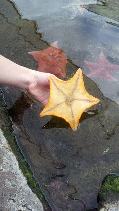 Starfish @ Sea World San Diego.  You can pick them up and check them out...