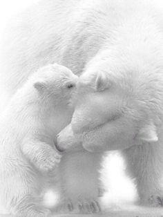Beautiful love ❤❤