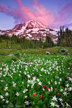 Mt Rainier on Fire, Summer Sunset, Washington