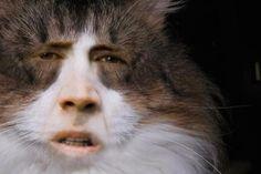 Nicolas cage as a cat