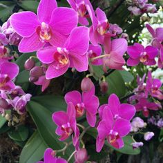 The New York Botanical Garden #orchidnybg #orchidelirium @nybg #orchids #orchid  2016-3-9 Orchids_photo by Lia Chang-8119