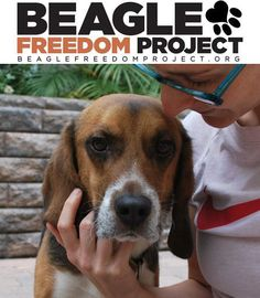 Beagle Freedom Project, so many labs test on beagles. Always buy animal cruelty free products. Always read your labels, you'll be shocked.