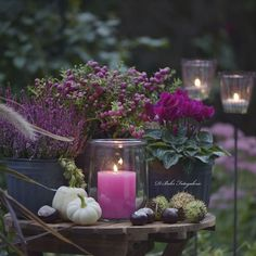 big likes, 144 comments - Daniela Behr - Wintergarten Ideen - Dekoration Germany Behr, Elegant Flowers, Fall Flowers, Purple Flowers, Deco Floral, Arte Floral, Autumn Garden, Autumn Inspiration, Fall Decor