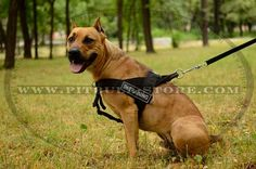 Great # dog #harness with #patches for #Pitbull