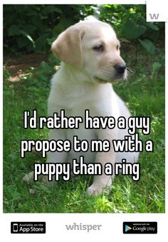 I'd rather have a guy propose to me with a puppy than a ring