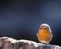 sweet little bluebird