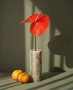 still life flower + fruit