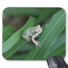 Grey Tree Frog Mousepad. Mouse Pad