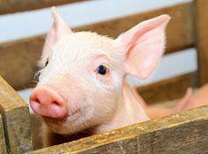 150 000 namn till regeringen mot vilda djur på cirkus