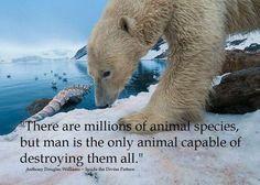 Qué triste, se nos da la capacidad y la responsabilidad de cuidarlos y en lo que hemos sido más eficaces es destruyéndolos. ॐ